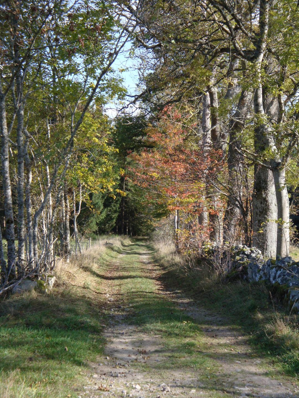 Chemin de randonnée à Montregard