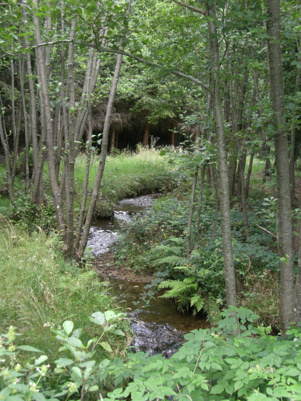 Rivière pour la pêche à Montregard